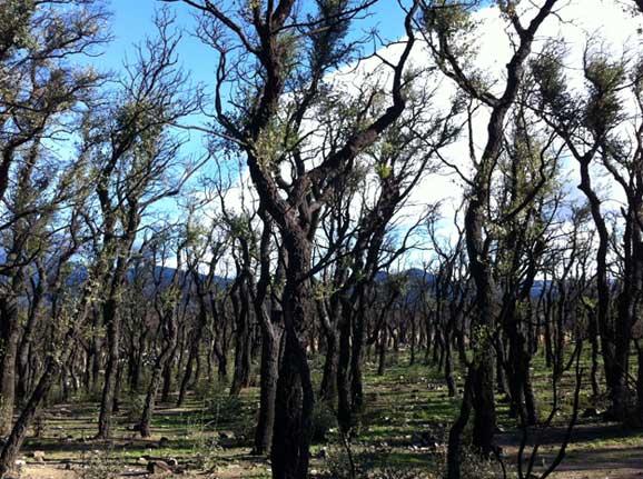 Les Alberes, Cantallops, Girona. Diciembre 2012. © Elina Hebe Prado